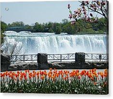 Niagara - Springtime Tulips Acrylic Print by Phil Banks