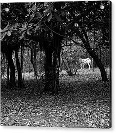 Nicaragua-fineart-23 Acrylic Print by Javier Ferrando