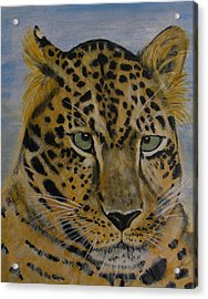 Nice Kitty Acrylic Print