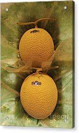 Nice Melons Acrylic Print by David Bearden