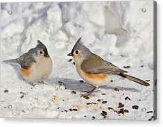 Nice Pair Of Titmice Acrylic Print by John Absher