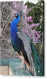 Acrylic Print featuring the photograph Nice To Meet You by Vadim Levin