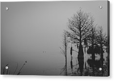 Niebla Acrylic Print by Michael Paul