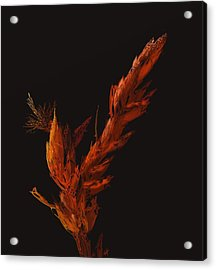Night Bloom Acrylic Print