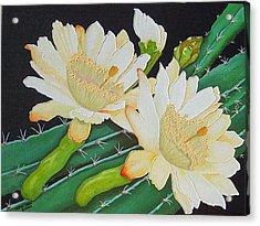 Night Blooming Cacti Acrylic Print by Carol Sabo
