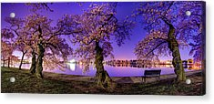 Night Blossoms 2014 Acrylic Print