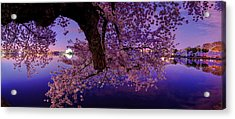 Night Blossoms Acrylic Print by Metro DC Photography