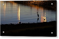 Acrylic Print featuring the photograph Night Fishing - A Great Blue Heron  by Jane Eleanor Nicholas