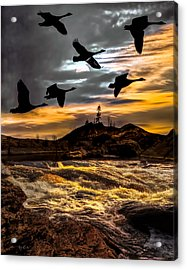 Night Flight Acrylic Print by Bob Orsillo