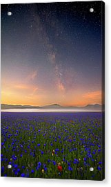 Night Flowers Acrylic Print