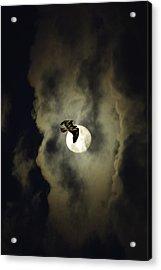Night Hawk Acrylic Print by Dale Stillman