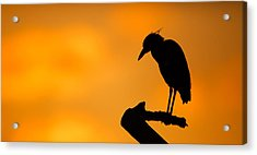 Night Heron Silhouette Acrylic Print by Andres Leon
