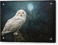 Night Owl Acrylic Print by Brian Tarr