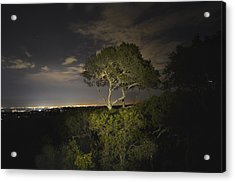 Night Glow Of A Tree Acrylic Print