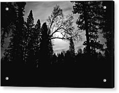 Night Shadows Acrylic Print