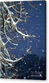 Night Snow Acrylic Print