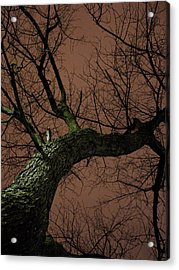 Night Tree Acrylic Print by Michel Mata