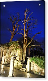 Night Trees Acrylic Print by Stephen Richards
