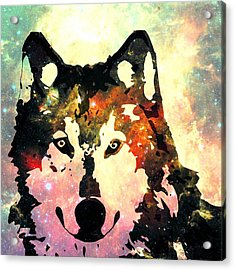 Night Wolf Acrylic Print by Anastasiya Malakhova