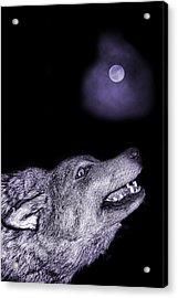 Acrylic Print featuring the photograph Night Wolf by Angel Jesus De la Fuente