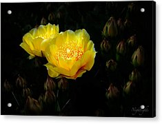 Acrylic Print featuring the photograph Nightlights by Len Romanick