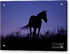 Nights Of Freedom Acrylic Print by Kate Purdy