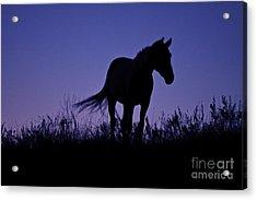 Nights Of Freedom Acrylic Print