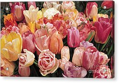 Acrylic Print featuring the painting Nikki's Tulips by Tim Gilliland
