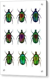 Nine Beetles Against A White Background Acrylic Print by Richard Boll