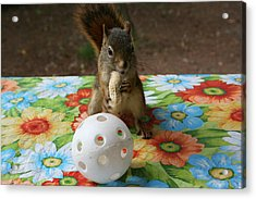 Acrylic Print featuring the photograph Ninja Squirrel by Paula Brown
