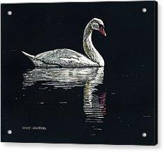 Nino's Swan Acrylic Print by Robert Goudreau