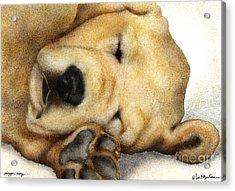 Nipper Nap... Acrylic Print by Will Bullas