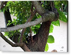 Acrylic Print featuring the photograph Nispero Tree by Rafael Salazar