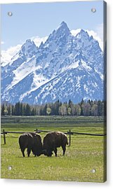 No Butts About It Acrylic Print by Charles Warren
