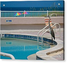 No Diving Acrylic Print by Joan McArthur
