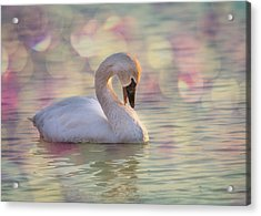Acrylic Print featuring the photograph Shy Swan by Patti Deters