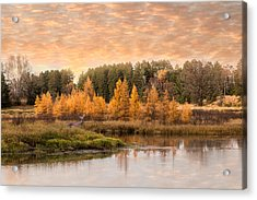 Acrylic Print featuring the photograph Tamarack Buck by Patti Deters