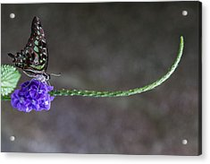 Acrylic Print featuring the photograph Butterfly - Tailed Jay II by Patti Deters