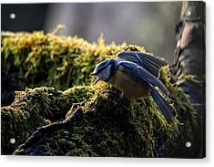 No More Mr. Nice Guy Acrylic Print by Susanne Ludwig