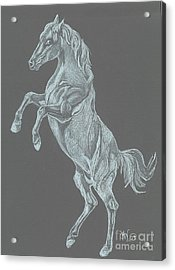 Acrylic Print featuring the drawing No Name by Carol Wisniewski