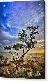 No Stress Today Acrylic Print by Marvin Spates