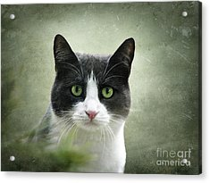 Nobody Knows The Troubles I've Seen Acrylic Print by Ellen Cotton