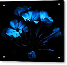 Nocturnal Blue Acrylic Print