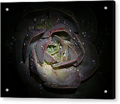 Nocturnal Diamonds Acrylic Print by Evelyn Tambour