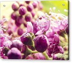 Nodes Of A Lilac Acrylic Print by Yvon van der Wijk