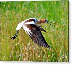 Acrylic Print featuring the photograph Noisy Bird by Lula Adams