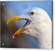 Acrylic Print featuring the photograph Noisy One by Dale Nelson