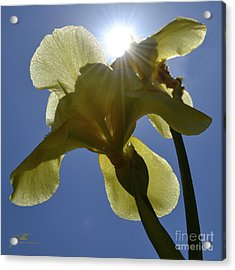 Noni's Light Acrylic Print by Suzette Kallen