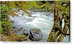 Nooksack River Rapids Washington State Acrylic Print by A Gurmankin