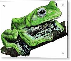 Norhayatis Flying Frog Acrylic Print by Roger Hall